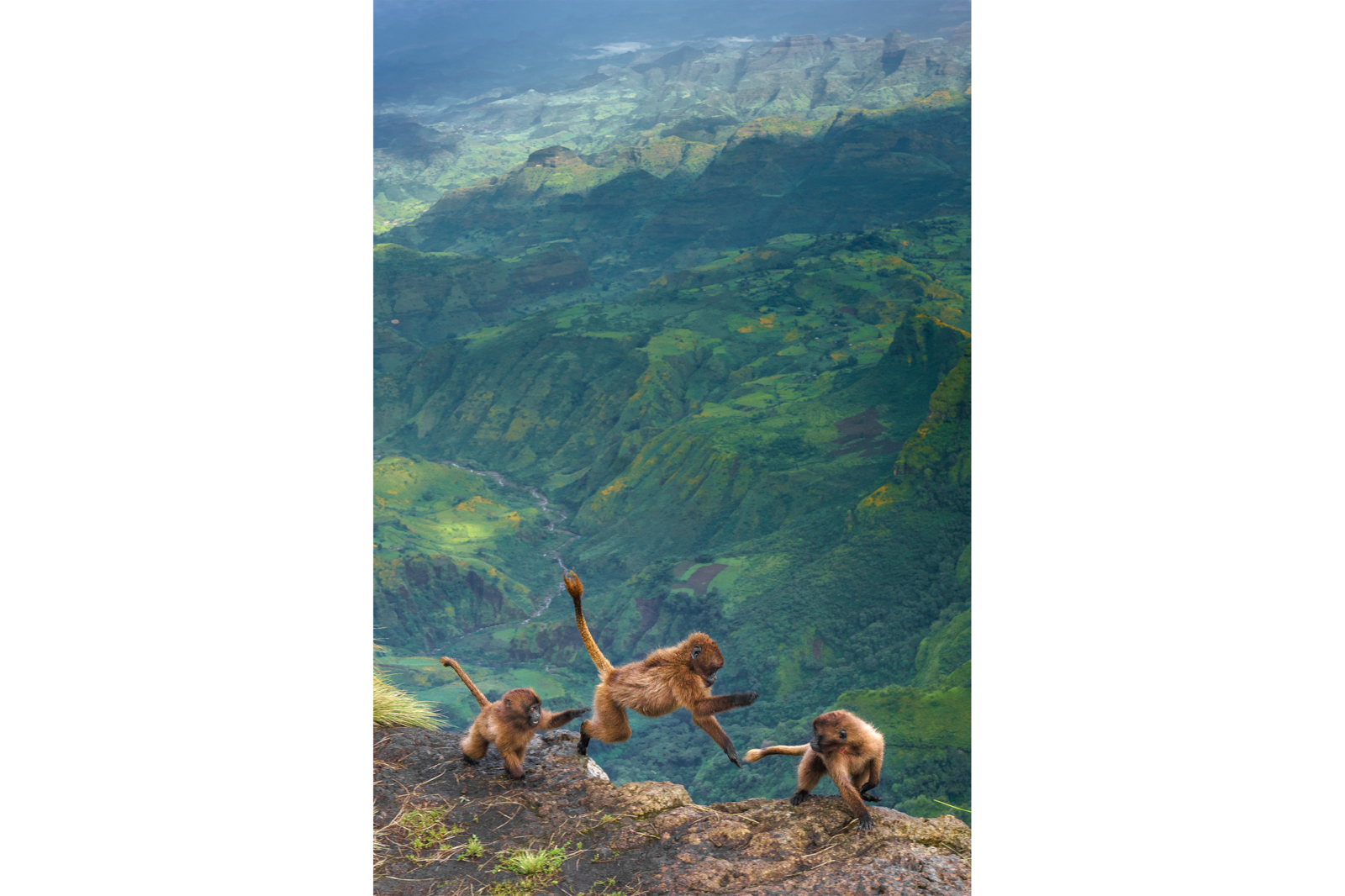 monkeys playing on edge of cliff alpha 7RIII